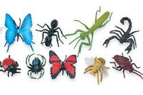 شركات رش الحشرات بجدة